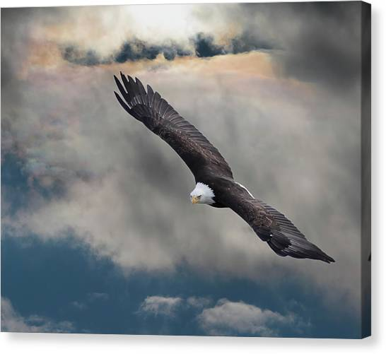 An Eagle In Flight Rising Above The Canvas Print
