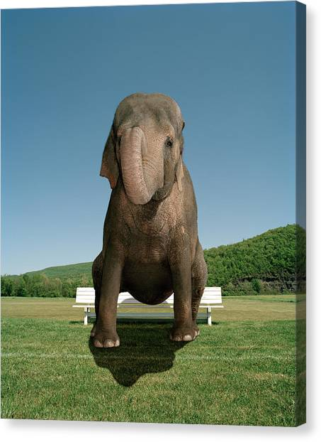 An Elephant Sitting On A Park Bench By Matthias Clamer