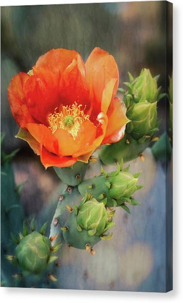 Canvas Print - An Orange Crush  by Saija Lehtonen