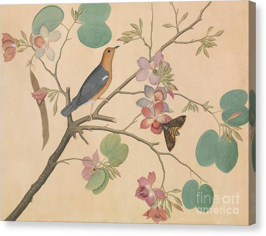 Moth Canvas Print - An Orange Headed Ground Thrush And A Moth On A Purple Ebony Orchid Branch, 1778 by Shaikh Zain ud-Din