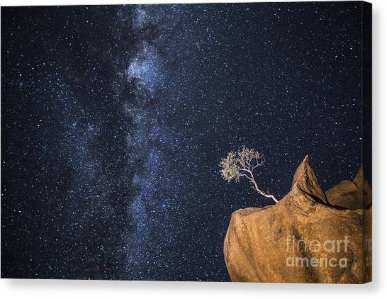 Southern Rock Canvas Print - An Tree Grows In An Impossible Position by 2630ben