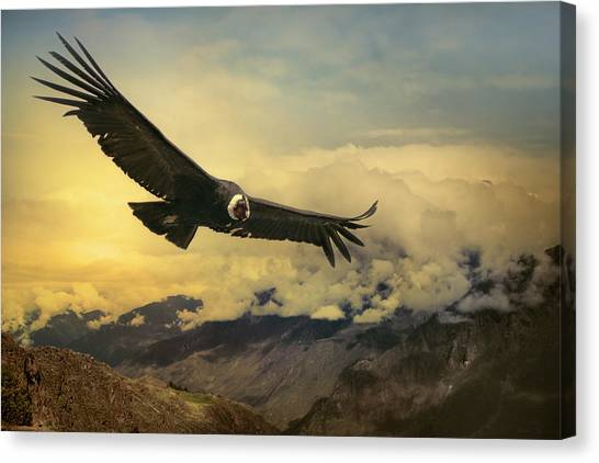 Andean Condor Canvas Print by Istvan Kadar Photography