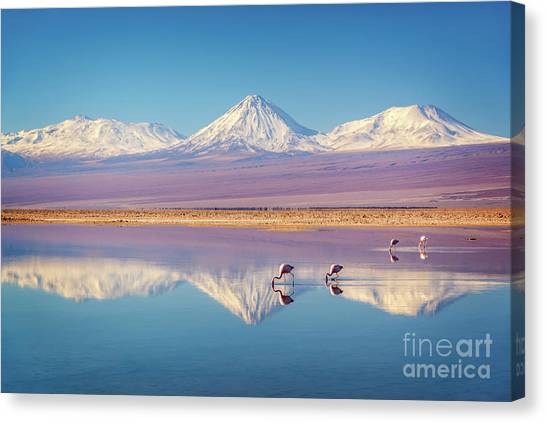 Andes Mountains Canvas Print - Andean Flamingos In Atacama Salar, Chile by Delphimages Photo Creations