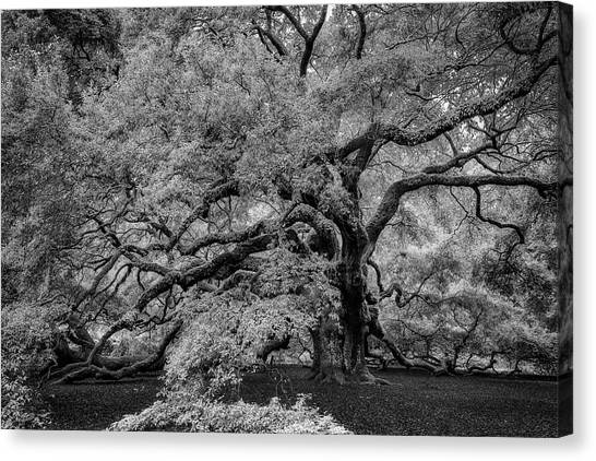 Canvas Print featuring the photograph Angel Oak Tree Black And White by Rick Berk