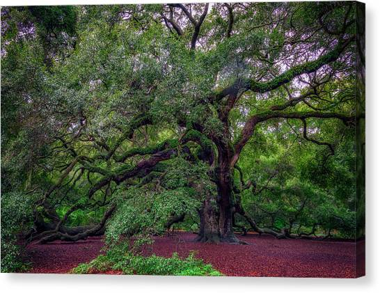 Canvas Print featuring the photograph Angel Oak Tree by Rick Berk