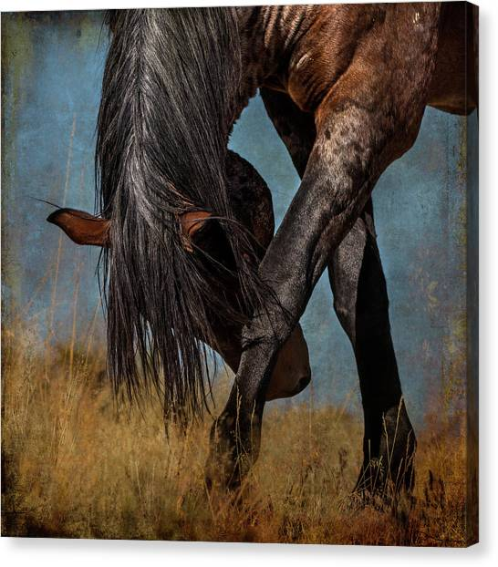 Angles Of The Horse Canvas Print