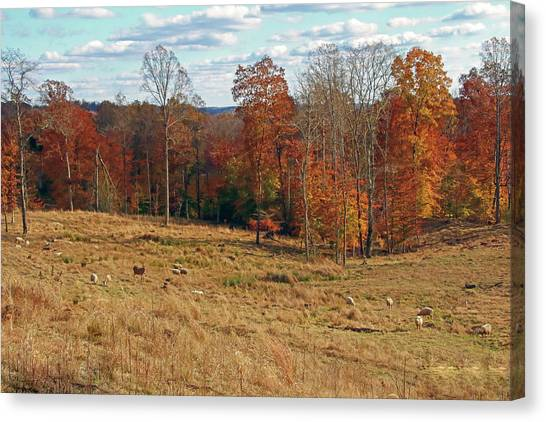 Canvas Print featuring the photograph Animals Grazing On A Fall Day by Angela Murdock