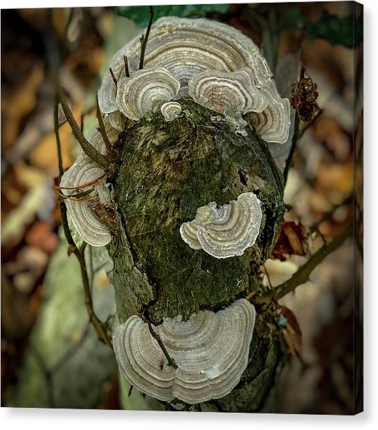 Another Fungus Canvas Print