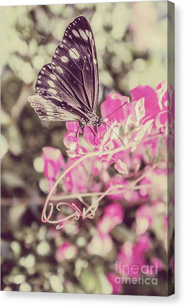Moth Canvas Print - Antique Spring by Jorgo Photography - Wall Art Gallery