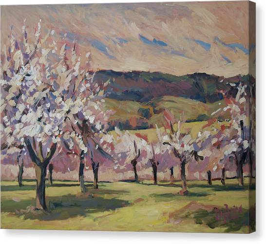 Apple Blossom Geuldal Canvas Print