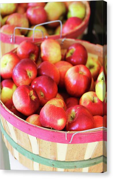 Apple Bucket Canvas Print