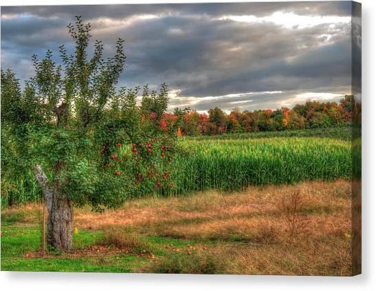Canvas Print featuring the photograph Apple Trees In Autumn - New Hampshire by Joann Vitali