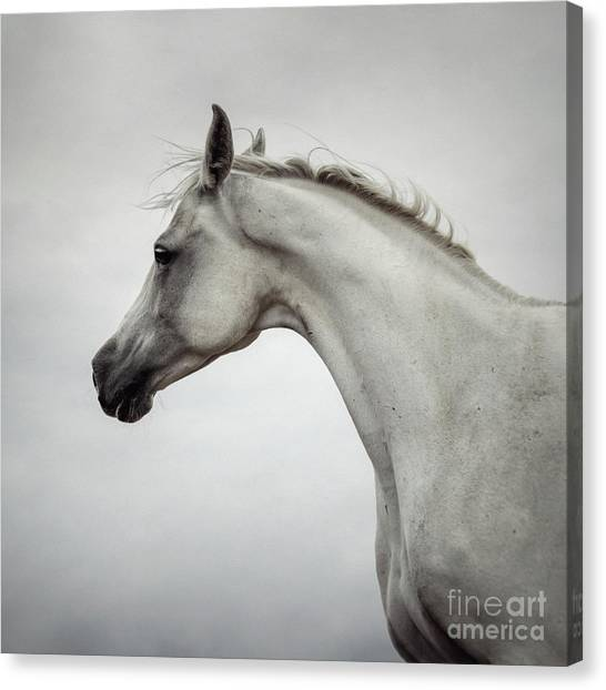 Canvas Print featuring the photograph Arabian Horse Portrait by Dimitar Hristov
