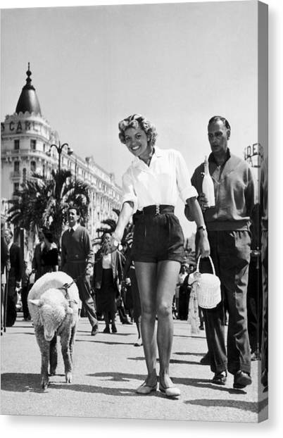 Arlette Patrick And His Sheep At Cannes Canvas Print