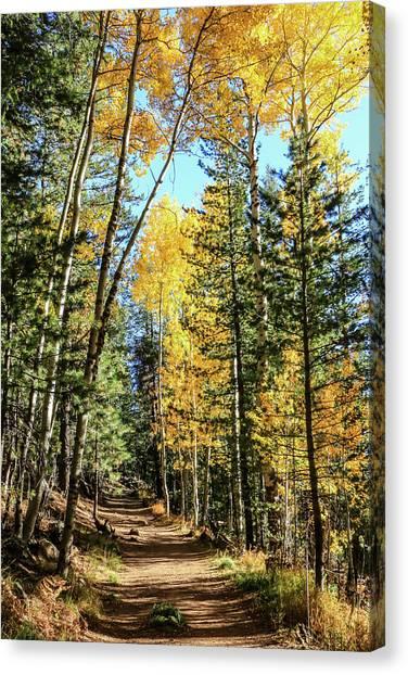 Aspen Trail Canvas Print