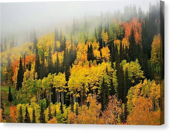 Aspens In Fog Canvas Print