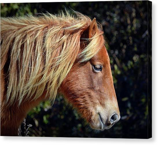 Canvas Print featuring the photograph Assateague Pony Sarah's Sweet Tea Profile by Bill Swartwout Fine Art Photography