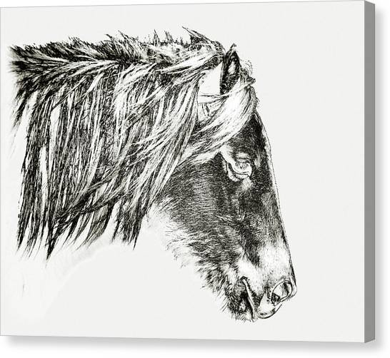 Canvas Print featuring the photograph Assateague Pony Sarah's Sweet Tea Sketch by Bill Swartwout Fine Art Photography
