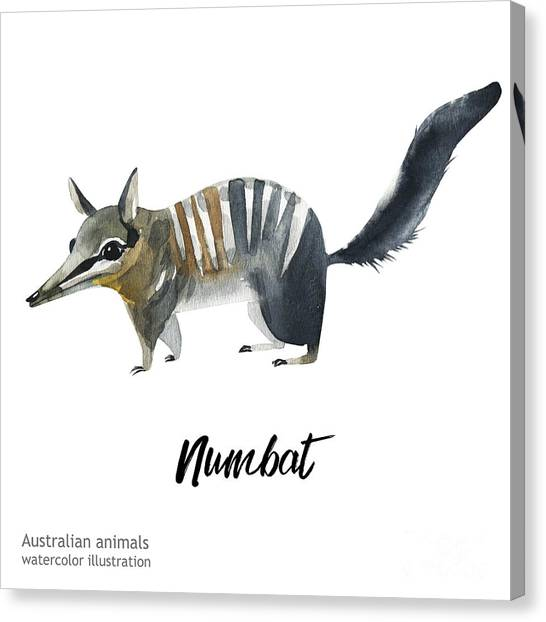 Zoology Canvas Print - Australian Animals Watercolor by Kat branches