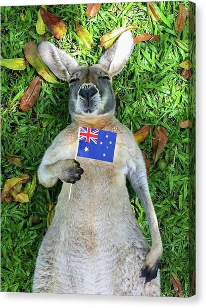 Australian Kangaroo Canvas Print by Mb Photography