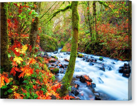 Canvas Print featuring the photograph Autumn Along Bridal Veil Creek Columbia River Gorge by Dee Browning