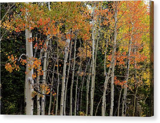 Canvas Print featuring the photograph Autumn As The Seasons Change by James BO Insogna