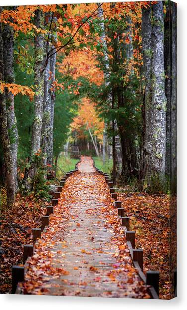 Autumn At Jesup Path Canvas Print