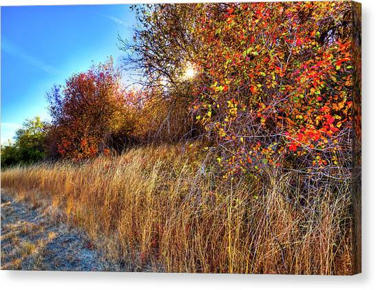 Canvas Print featuring the photograph Autumn At Magpie Forest by David Patterson