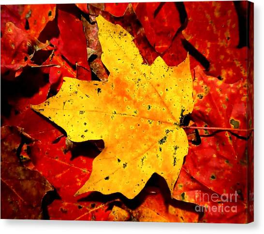 Autumn Beige Yellow Leaf On Red Leaves Canvas Print