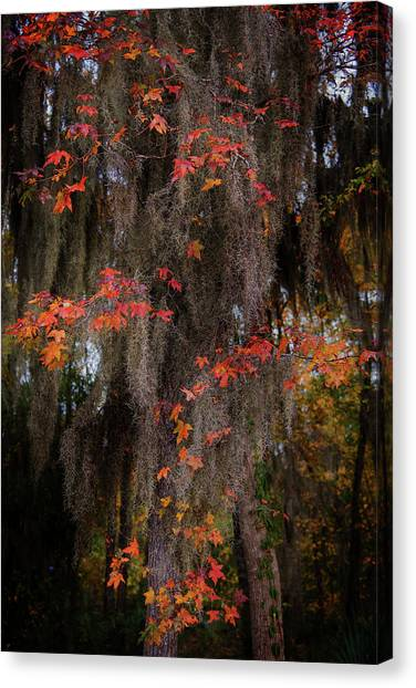 Autumn Color In Spanish Moss Canvas Print