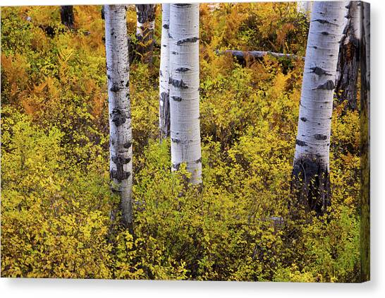Autumn Contrasts Canvas Print