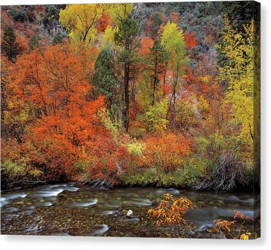 Autumn Creek Canvas Print by Leland D Howard