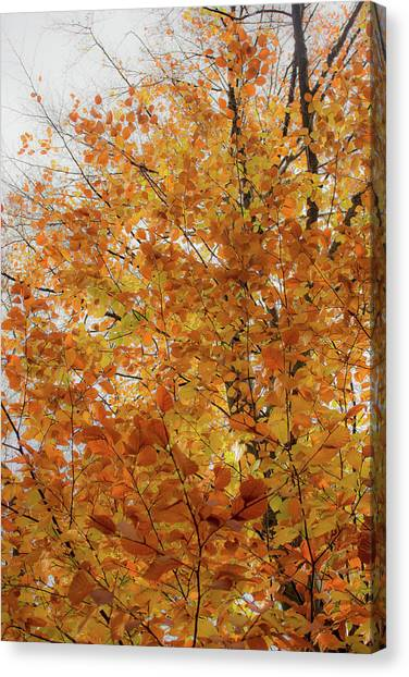 Autumn Explosion 1 Canvas Print