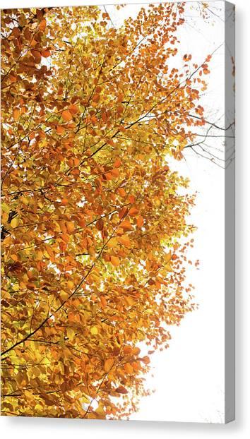 Autumn Explosion 2 Canvas Print