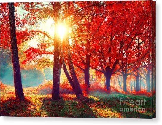 Maple Tree Canvas Print - Autumn. Fall Scene. Beautiful Autumnal by Subbotina Anna