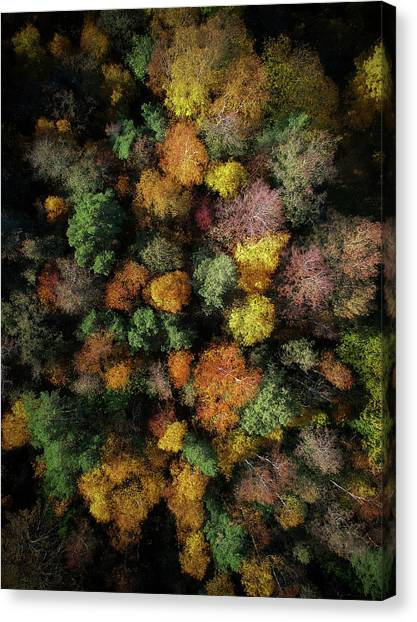 Aerial Canvas Print - Autumn Forest - Aerial Photography by Nicklas Gustafsson