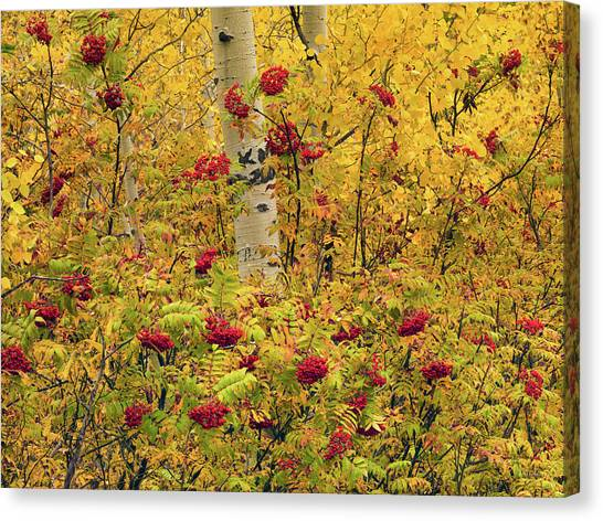 Idaho Canvas Print - Autumn Forest Colors by Leland D Howard