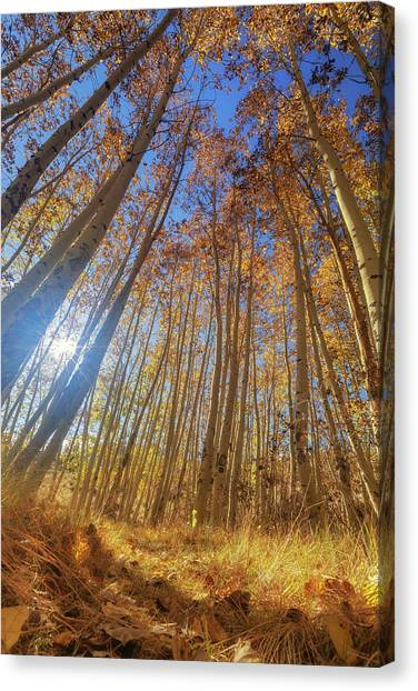 Canvas Print featuring the photograph Autumn Giants by Tassanee Angiolillo