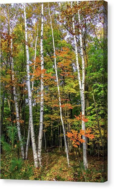 Autumn Grove, Vertical Canvas Print