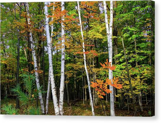 Autumn Grove, Wisconsin Canvas Print