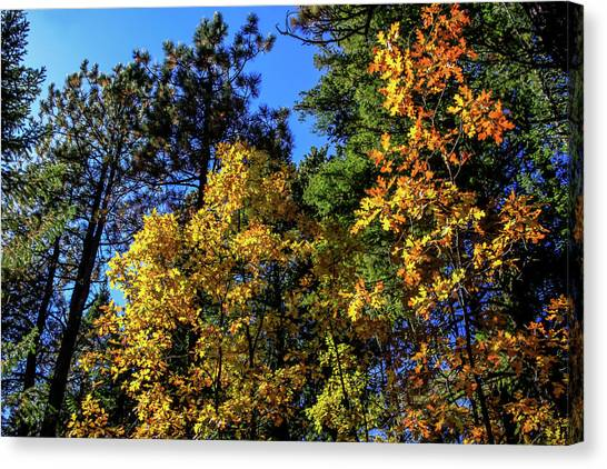 Autumn In Apache Sitgreaves National Forest, Arizona Canvas Print
