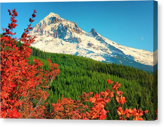 Canvas Print featuring the photograph Autumn In Lolo Pass Mt. Hood National Forest by Dee Browning