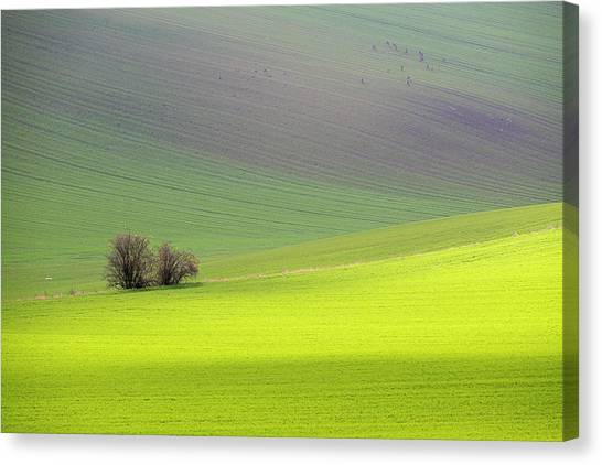 Autumn In South Moravia 13 Canvas Print