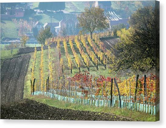 Canvas Print featuring the photograph Autumn In Moravia 7 by Dubi Roman