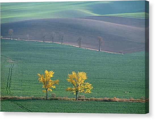 Canvas Print featuring the photograph The Chestnut Way, Moravia 14 by Dubi Roman