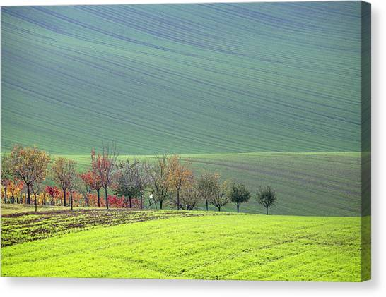 Autumn In South Moravia 18 Canvas Print