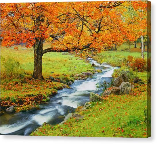 Autumn In Vermont G Canvas Print by Ron thomas