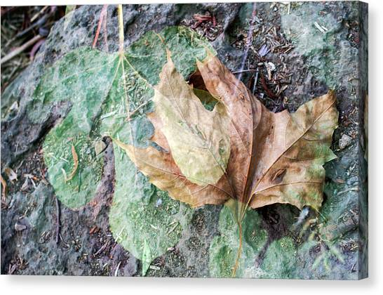Canvas Print featuring the photograph Autumn Leaves by Dubi Roman
