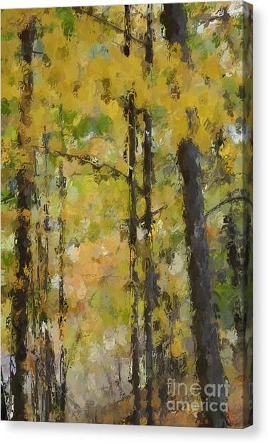 Autumn Light Canvas Print by David Boudreau