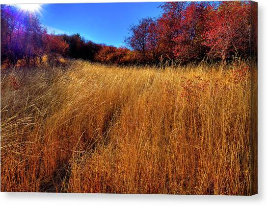 Canvas Print featuring the photograph Autumn Path by David Patterson